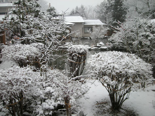 20080111yamabuki_yuki1.jpg