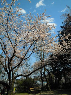 20100425sakura9.jpg