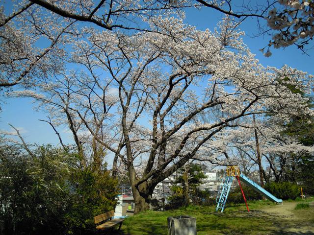 20100425sakura3.jpg
